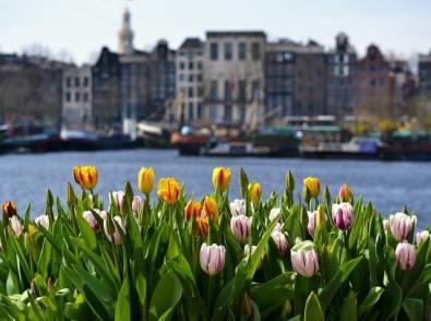 Tulips_Amsterdam2