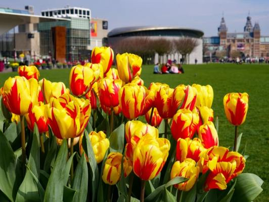 Tulips_vanGogh_Museum
